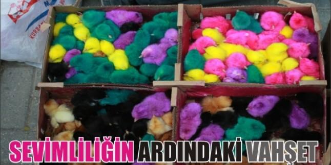 Renkli Civcivlere yapılan eziyete sen de DUR DE !