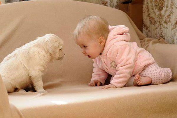 bebekler-ve-hayvan-iliskisi