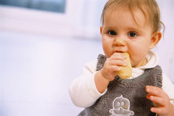 Baby Eating a Teething Biscuit --- Image by © Imageshop/Corbis