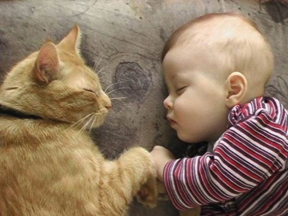cocuk-kedi