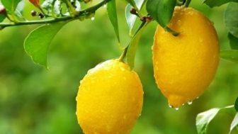 limonla-yapilan-hamilelik-testi-4