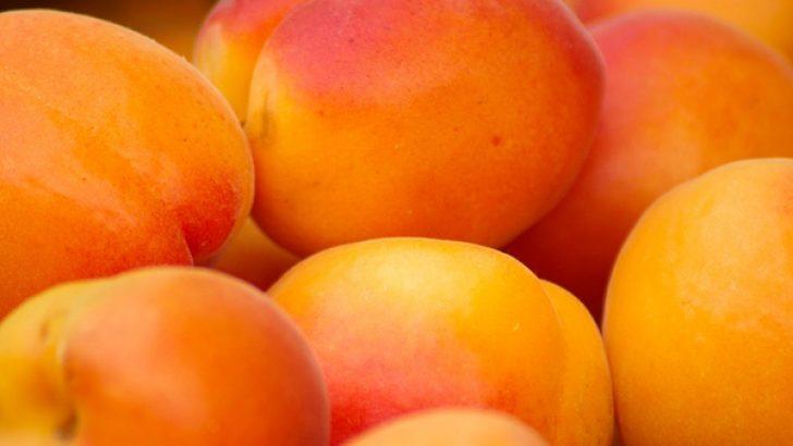 Kayısı Meyvesinin Faydaları