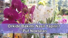 Orkide Bakımı Nasıl Yapılır? Hiç bir yerde bulamayacağınız! Püf Noktaları