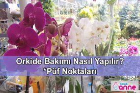 Orkide Bakımı Nasıl Yapılır, Püf Noktaları