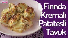 Fırında Kremalı Patatesli Tavuk Tarifi