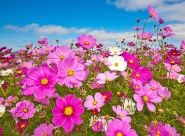En çok sevilen çiçek türleri