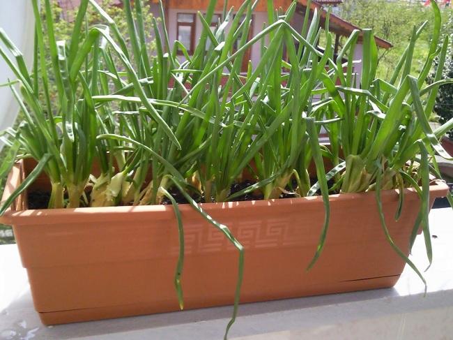 evde-bitki-yetistirmek-icin-tavsiyeler