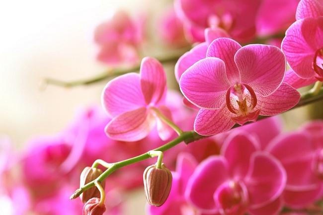 orkide-bakimi-hakkinda-oneriler